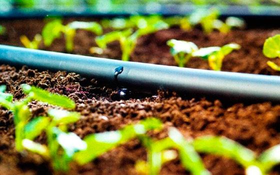Fertilizantes Hidrosolubles